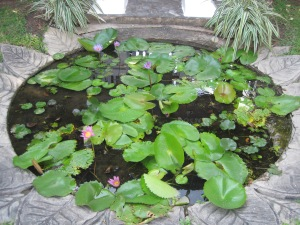 Most places have a water feature of some kind