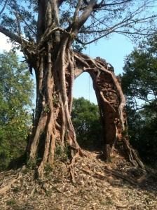 Sambo Prey Kuk - tree and temple
