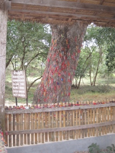 The board reads 'Killing Tree against which executioners beat children'. The coloured bracelets are brought by visitors to commemorate the dead.