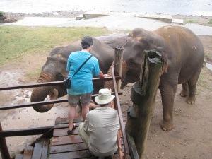 Michele and Randal feeding the elephants