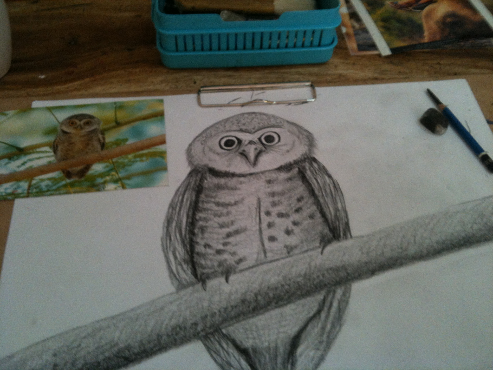 From photo: Owl