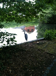 14. Be a tourist in your own town: a stork on my local pond in (Surrey, UK)