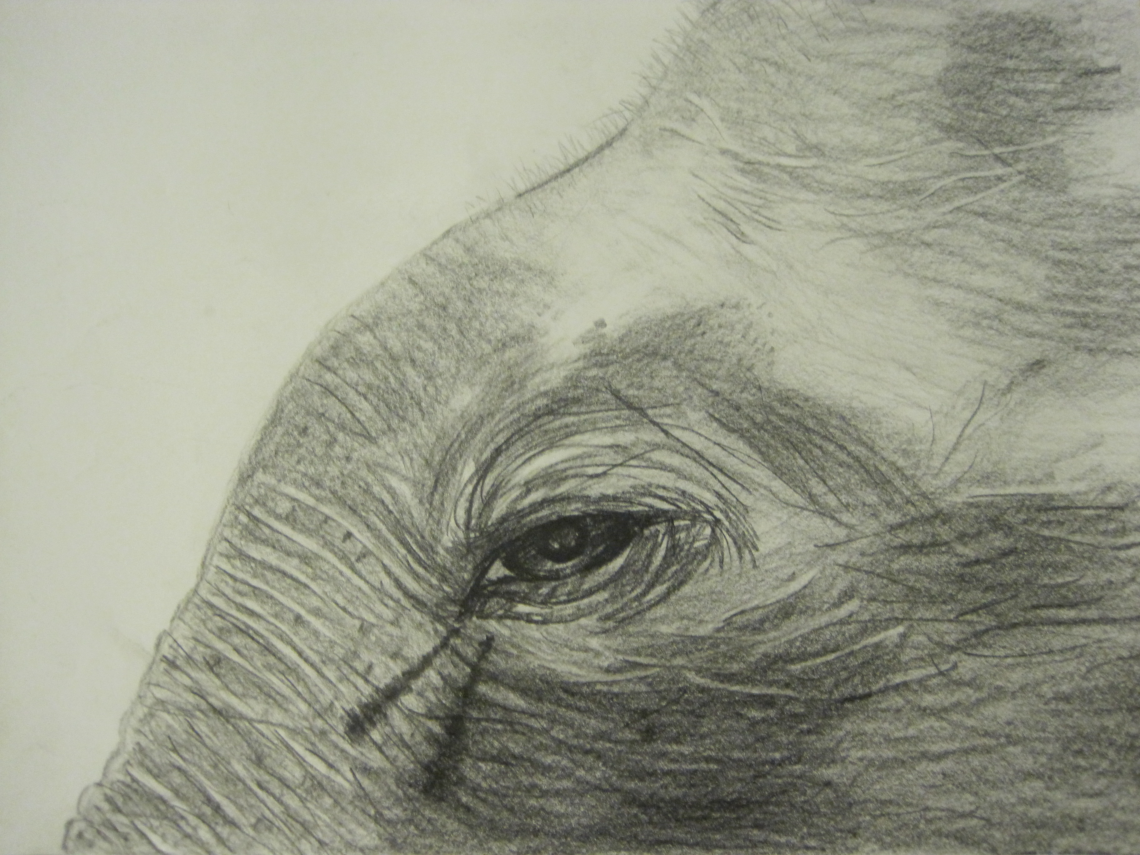 Elephant - I worked hard to put in a lot of detail, but still didn't manage it all