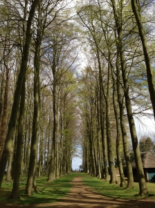 NT Hidcote Garden - Tree lined Avenue