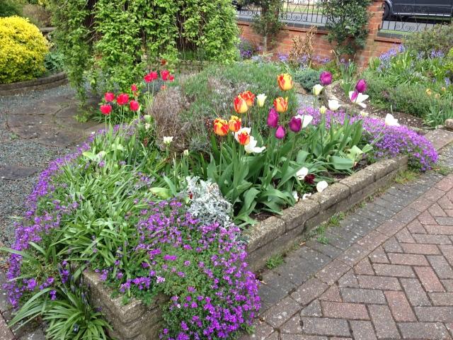 A small garden highlight