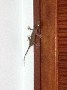 This Gecko was one of the bigger ones in my bedroom...